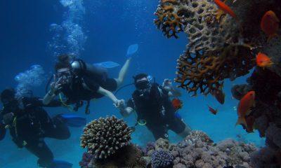 Tre personer dykker ved koraller